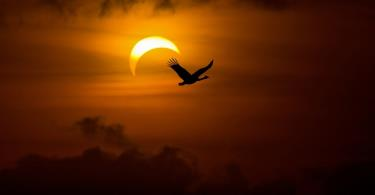 Solar Eclipse on Sunday 3rd November 2013