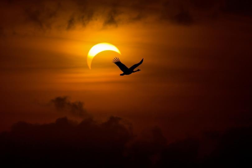 العالم العربي يشهد كسوفا جزئيا للشمس يوم الأحد 03 نوفمبر
